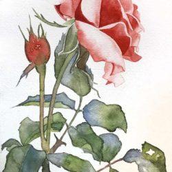 acquerello-fiore